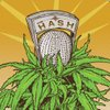 Cover image of The Hash