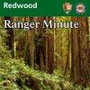 Cover image of Redwood Ranger Minute